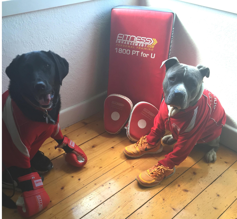 Dog Training Boot Camp Melbourne
