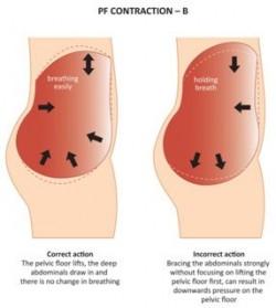 Pelvic Floor Strengthening Exercises Fitness Enhancement